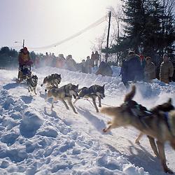 A sled dog team starting their run.  Sandwich, NH.  Sandwich Notch 50 sled dog race.