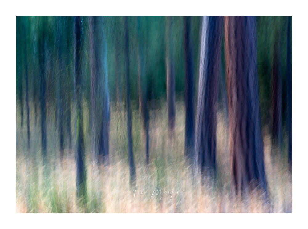 Photographing the hidden using long exposures and intentional camera movement shows the colours that are there but can't be seen with the naked eye, Black Butte area of Oregon