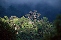 A view of the rain forest canopy in Borneo, with a patch of sun piercing the clouds to light up the forest.