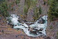 The Firehole River flows through a narrow canyon in an area where a few trees were spared from the fires of 1988 when large portions of Yellowstone National Park were consumed by wildfilre.  Wyoming, USA   The Firehole River flows north 21 miles from its source in Madison Lake on the Continental Divide to join the Gibbon River to form the Madison River.  The Firehole flows through several significant geyser basins in the park.  The river was named by early trappers for the steam that makes it appear to be smoking as if on fire....The river is surrounded by geothermal features which empty water into it. One effect of the input of this water is to increase the temperature of the water. Temperatures in the river have been measured as high as 30 °C (86 °F) and average 5 to 10 °C (9 to 18 °F) higher than areas upstream of geothermal influence.[4]...Firehole River has been a fishing mecca since the late 19th century and is known today for its excellent fly fishing.