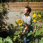 Agamemenon, founder of Repowering London, harvesting at Brondesbury Park Energy Garden. Energy Gardens is programme to roll out community gardens on over-land train stations in London. It is harvest time in the Brondesbury Park station garden with kale, courgettes, chillies, green tomatoes and many other vegetables and herbs.