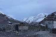 A Tibetan mastiff stands guard outside the nomadic community of Sumdho on Ladakh's Changtang plateau.