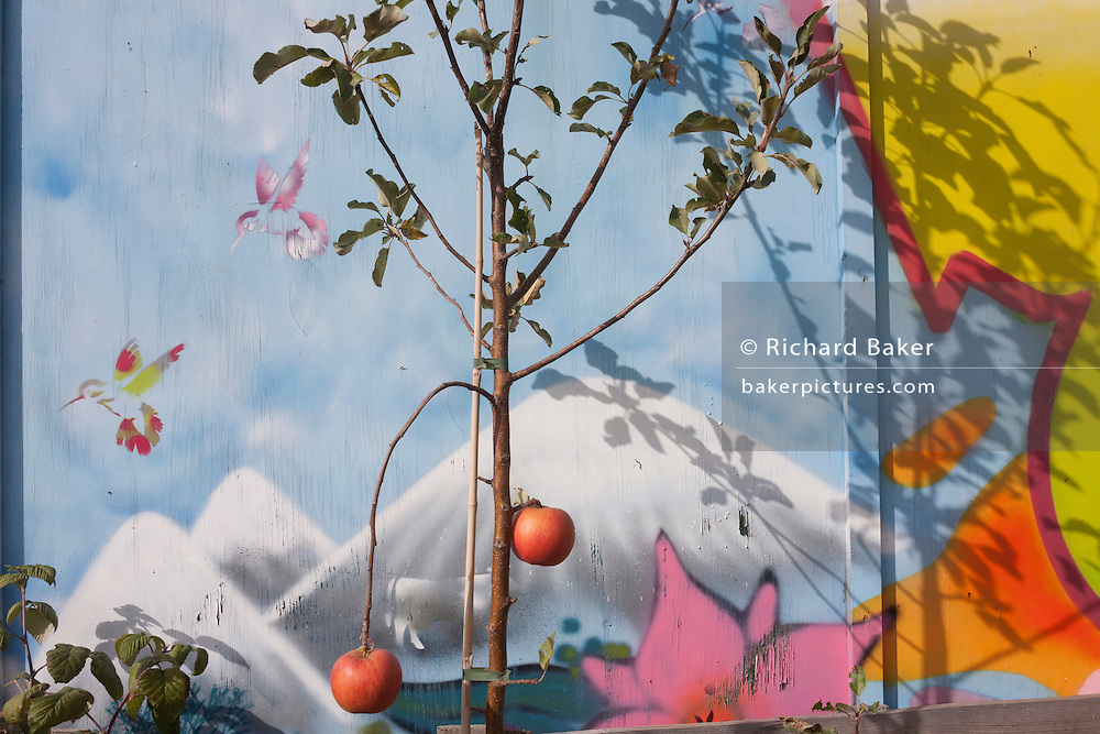Artwork and growing apples at the fence of the Grow Elephant Community Garden, on the new kent Road at Elephant & Castle, Southwark. Surrounded by the arrival of gentrified apartments, many bought by foreign investors, Grow Elephant is on New Kent Road and occupying the former Heygate estate. Regular gardening workshops, volunteering sessions are organised making it an important social space for the local residents.