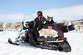 Reindeer herding dogs