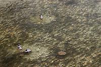 Mallard, Stockente, Canard col-vert (Anas platyrhynchos)<br /> Chub, Alet oder Döbel, Chevaine (Leuciscus cephalus)<br /> Feeding on eggs on spawning ground of Chub, Sava river, Slovenia<br /> Fischeier fressend an Laichgrund der Alet oder Döbel, Sava, Slowenien<br /> Se nourrisant d'oeufs sur frayère des Chevaines, Sava, Slovénie<br /> 12-06-2008
