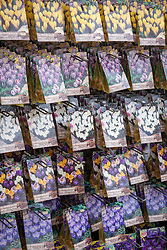 Packets of crocus bulbs for sale in a garden centre