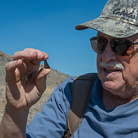 Archaeologist Robert Bettinger examines an arrowhead at 12,400' in California's White Mountains, the highest Native American settlement in the United States.