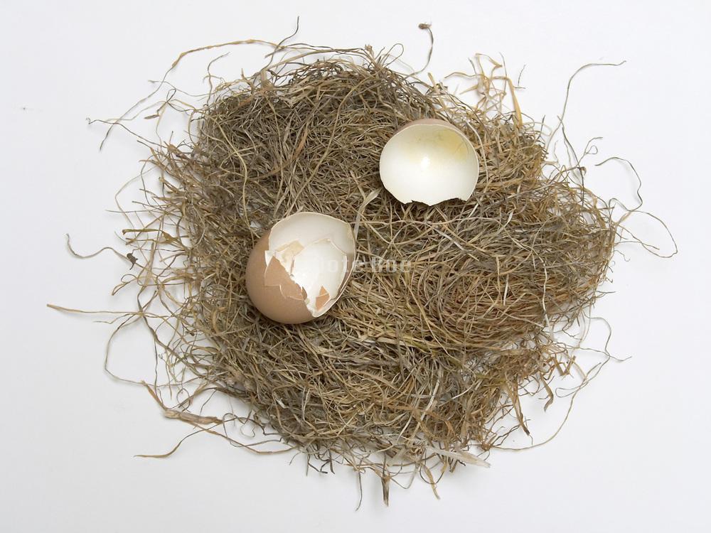 broken chicken egg shell on straw nest