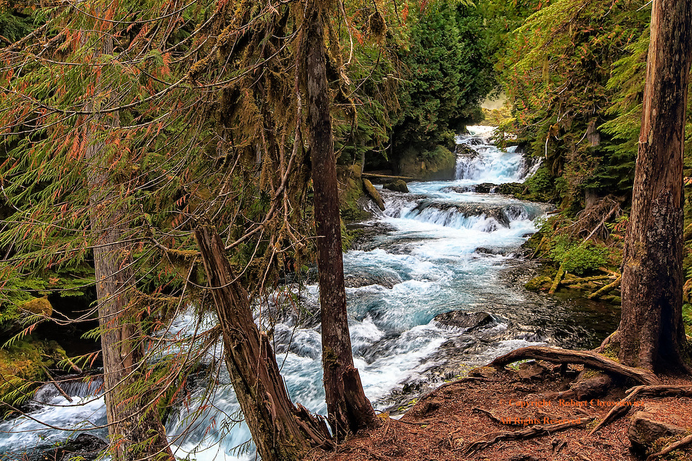 Surging McKenzie: After passing over the Koosah Falls the McKenzie River surges through the rugged windswept Willamette National Forest, Oregon USA.