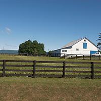 Blue Chip Farm - Standardbred