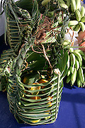 Palm frond basket of fruit, Hanavave, Island of Fatu Hiva, Marquesas Islands, French Polynesia<br />