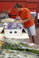 Il Mercato dei fiori di Sanremo: Reparto confezionamento *** Local Caption ***<br /> <br /> The flower market of Sanremo: Department packaging