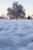 Winter Snow in the Belgian Ardennes