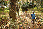 Akia, 7, who doesn't go to school, accompanies an uncle to help him with field work outside the town of Faye, Bas-Sassandra region, Cote d'Ivoire on Monday March 5, 2012.