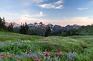 Wildflowers near the Paradise area at Mount Rainier National Park, Washington State, USA. Peaks of the Tatoosh Range is in the background.