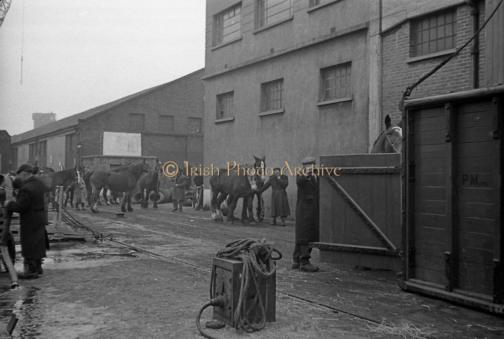 16/01/1960<br /> 01/16/1960<br /> 16 January 1960<br /> Horses for slaughter being loaded for export to the Netherlands from Dublin. Horses being led to the crane lift to load them onto the ship.