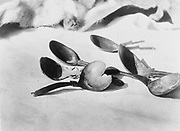 Elk-horn spoons- Tolowa, c1910. Photograph by Edward Curtis (1868-1952).