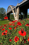 Poppies bloom near the H.M. Ruthven Bridge in Cotter, Arkansas.