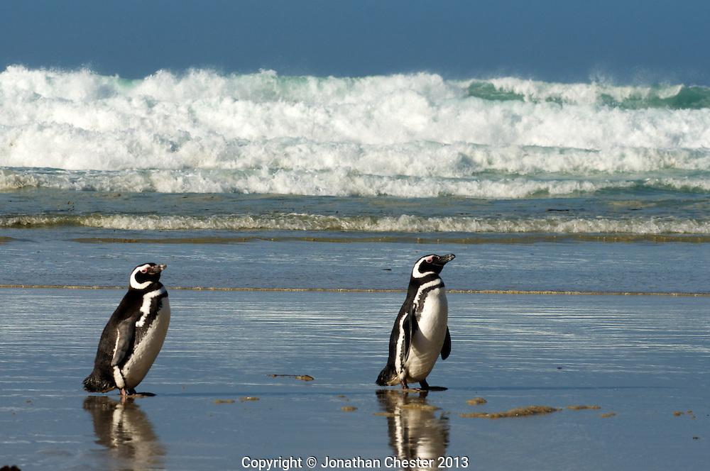 OOE.  Saunders Is Falklands South Georgia, Expedition,Antarctic Peninsula