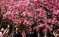 Visitors take photo of the scenery of cherry blossom at Yuantongshan Park in Kunming, capital of southwest China's Yunnan Province, March 14, 2016. Cherry flowers there have been in full bloom recently, attracting lots of tourists for visit. EXPA Pictures © 2016, PhotoCredit: EXPA/ Photoshot/ Lin Yiguang<br /> <br /> *****ATTENTION - for AUT, SLO, CRO, SRB, BIH, MAZ, SUI only*****