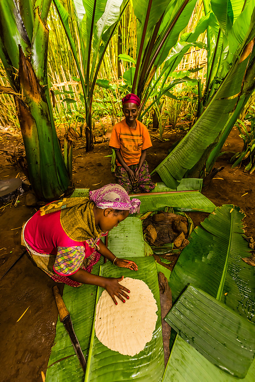 Dorze people making kocho ( a staple food). Making flour for bread from the false banana leaf. It is fermented in the ground for 3 months before making the flour, Ethiopia.