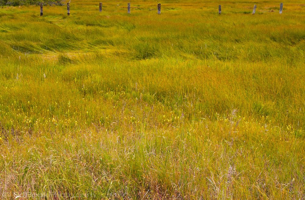 Tahuya River mouth at the Hood Canal of Puget Sound grasses, Tahuya, Mason County, Kitsap Peninsula, Washington state, USA