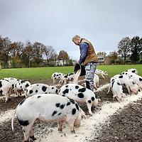 Nederland, Amsterdam , 19 november 2013.<br /> Varkens Sportpark de Melkweg.<br /> artikel gaat over de consternatie rondom de varkens. Dafne Westerhof van het Beloofde Varkensland, en medestanders, vinden dat de varkens niet goed genoeg behandeld worden door hun leven op het veld. De eigenaren van de varkens, een Twentse stichting 'Buitengewone Varkens' (dus niet De Jong) heeft op verzoek van Westerhof een afgesloten hok met stro op het veld gebouwd, maar de weerstand blijft.<br /> Op de foto vrijwilliger Arno de jong voedert de varkens op het veld.<br /> Foto:Jean-Pierre Jans