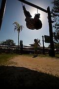 Vitoria_ES, Brasil...Parque Botanico da Companhia Vale do Rio Doce (CRVD), em Vitoria...The Botanic Park of  Vale do Rio Doce (CRVD) company, in Vitoria....Foto: LEO DRUMOND / NITRO