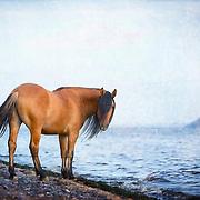 20200105 All Rensink Mustangs