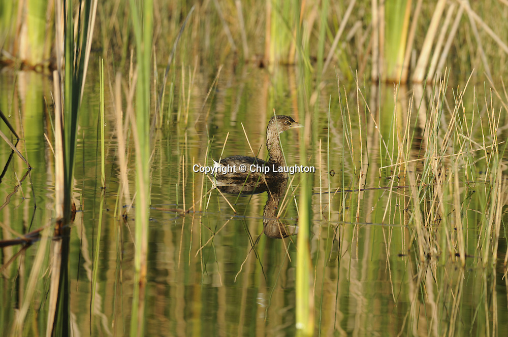 Wildlife stock image photo