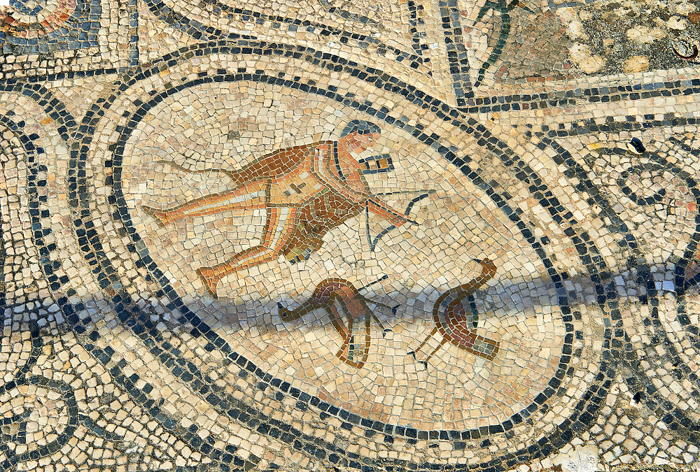 Roman mosaic of a hunter. Volubilis Archaeological Site, near Meknes, Morocco .<br /> <br /> If you prefer to buy from our ALAMY PHOTO LIBRARY  Collection visit : https://www.alamy.com/portfolio/paul-williams-funkystock/roman-mosaic.html - Type -   Volubilis    - into the LOWER SEARCH WITHIN GALLERY box. Refine search by adding background colour, place, museum etc<br /> <br /> Visit our ROMAN MOSAIC PHOTO COLLECTIONS for more photos to download  as wall art prints https://funkystock.photoshelter.com/gallery-collection/Roman-Mosaics-Art-Pictures-Images/C0000LcfNel7FpLI