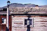 Nevada City historic ghost town, Montana, USA cactus plants growing on roof of old wooden building