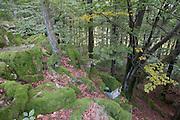Felsen auf dem Katzenbuckel, höchster Punkt des Odenwaldes (626m), Walldürn, Odenwald, Naturpark Bergstraße-Odenwald, Baden-Württemberg, Deutschland | Katzenbuckel, highest hill in Odenwald, Baden-Wuerttemberg, Germany