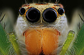 Insect super macro close up