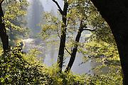 Smokey Morning, Indian Creek, oak trees, maple tree, wild blackberries, Plumas National Forest, Sierra Nevada Mountains, near Greenville CA and Quincy CA