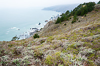 United States, California. Muir Beach north of San Francisico with a dramatic coastline and a small village.