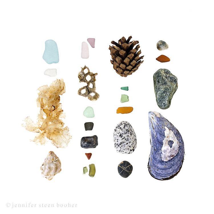Sea glass, Irish Moss (Chondrus crispus), Waved Whelk (Buccinum undatum), Northern Rock Barnacle (Semibalanus balanoides), beach stones (schist, granite, moss quartz, possibly mica), Red Pine cone (Pinus resinosa), Blue Mussel (Mytilus edulis).