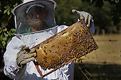Nicaragua: UCASA Fairtrade Honey