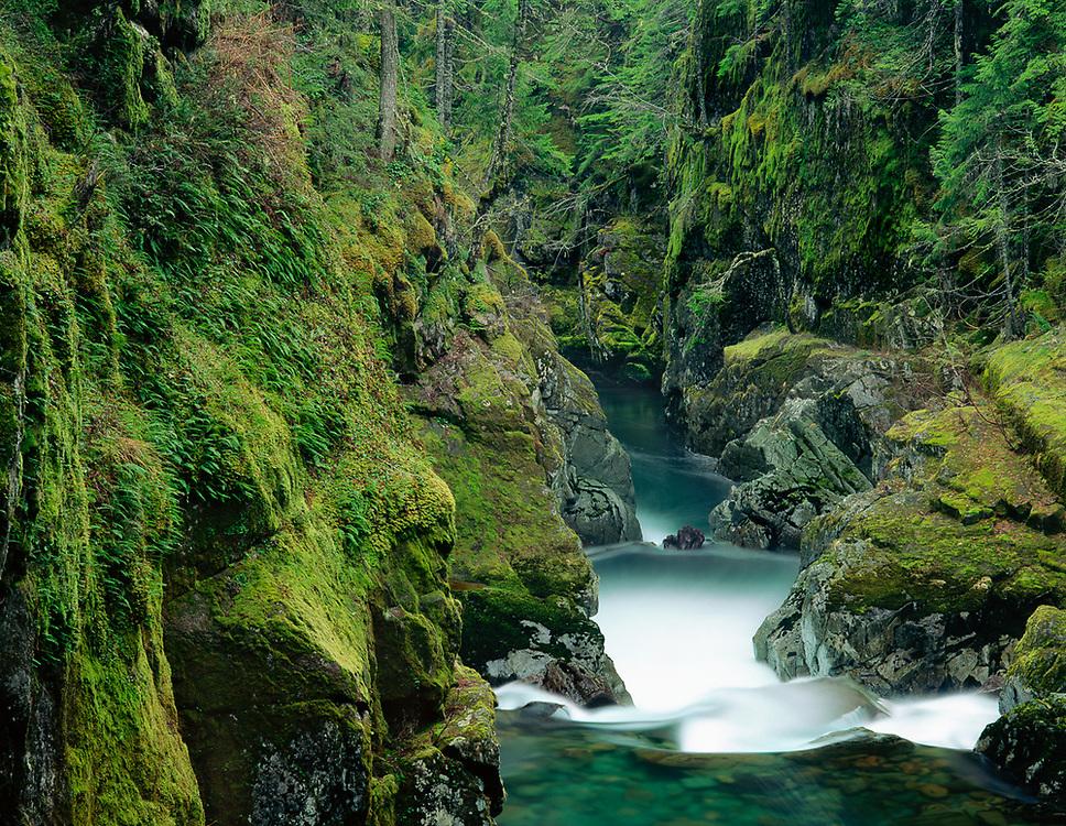 Ohanapecosh River, Mount Rainier National Park, Washington, USA