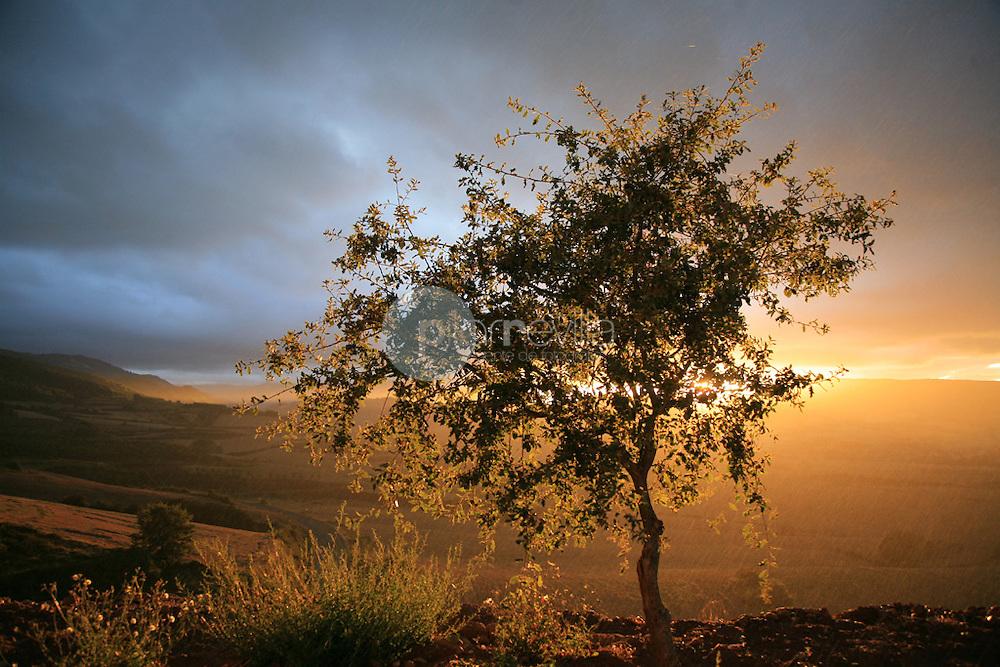 Roble. La Rioja. España ©Daniel Acevedo / PILAR REVILLA