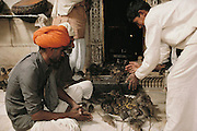 Feeding the rats at the Hindu Rat Temple in Deshnoke, Rajasthan, India. This ornate Hindu temple was constructed by Maharaja Ganga Singh in the early 1900s as a tribute to the rat goddess, Karni Mata.