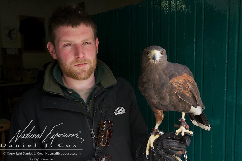 Mark Barett with a Harris Hawk, part of the Ashford Castle falconry program , Ireland.