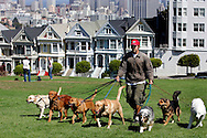 US-SAN FRANCISCO: Old Victorian houses on Alamo Square with the modern city in the background. A guy walking dogs.PHOTO: GERRIT DE HEUS