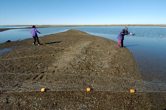 Inuit native in Barrows, Alaska preparing fishing net. Alaska