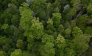 Northcentral Pennsylvania, summer treetops