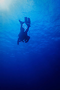 Scuba diver silhouette mid water on tropical Agincourt reef, Great Barrier Reef, Queensland, Australia. <br />