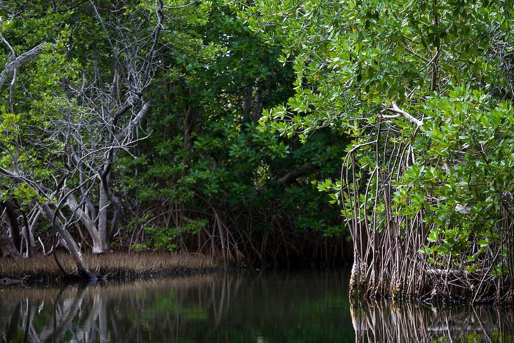Venezuela_VEN, Venezuela...Regiao de Manguezal na Venezuela. ..Mangrove region in Venezuela...Foto: JOAO MARCOS ROSA / NITRO