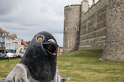 Windsor, UK. 1st July, 2020. An animal rights activist dressed as a giant pigeon arrives for a PETA UK protest outside Windsor Castle. Animal rights charity PETA UK is calling on the Queen, who is currently isolating at Windsor Castle, to cut ties with pigeon racing following a PETA US investigation which revealed that all eight birds sent by the Queen to participate in the 2020 South African Million Dollar Pigeon Race (SAMDPR) died in quarantine and that fewer than a quarter of the birds entered for the race subsequently complete it.