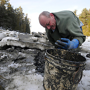 "2/17/11 -- HARPSWELL, Maine. Michael Bernier of Harpswell digs clams in Quahog Bay on Thursday afternoon. He and a small group of diggers cut through the ice at low water to dig here. .Quahog Bay was reopened for digging on Feb 11, 2011 after many years of closure, according to Department of Marine Resources Biotoxin Monitoring Manager, Darcie Couture. She wrote, ""This area had been closed for many years due to failing water quality, caused by bacterial pollution. A serious pollution source was recently identified and remediated.  The area will close in June for the summer, because unfortunately, this area, like many others on the Maine coast, suffer from the increased pressure of a seasonal summer population, which negatively impacts water quality, and results in many of our shellfish resources remaining closed to harvest during that time."" Photo by Roger S. Duncan."