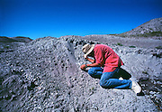 Paleontologist Jack Horner looking at dinosaur egg shells on Egg Mountain near Choteau, Montana.  Jack was much of the inspiration for Michael Crighton's Jurassic Park novel.<br /> Montana.